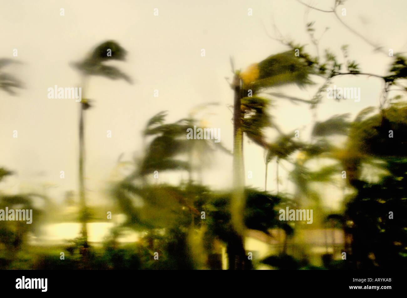 Florida Hurrikan Saison Sturm weht durch die Palmen mit Winden bei hohen Geschwindigkeiten in einem Strand Straße in Palm Beach Miami County Stockbild