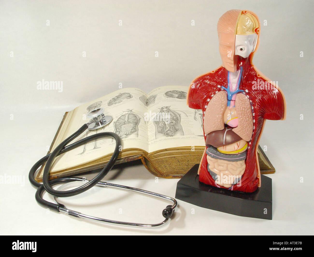 Anatomie-Modell des menschlichen Körpers mit einem alten Medizin ...