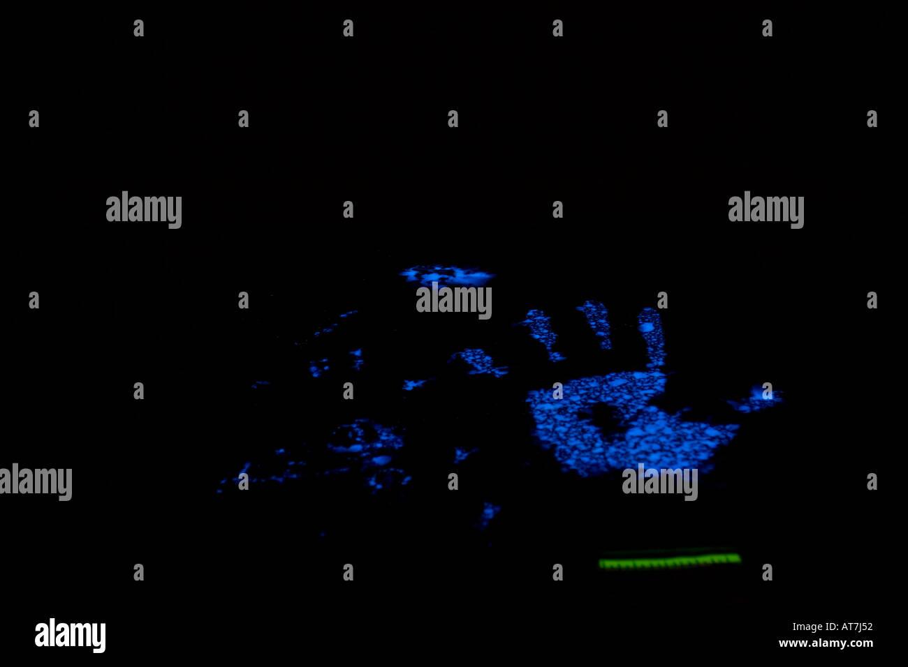 Drucke mit Luminol um festzustellen, ob die Drucke Spuren von Blut haben behandelt. Luminol wird Blut lila. Stockbild