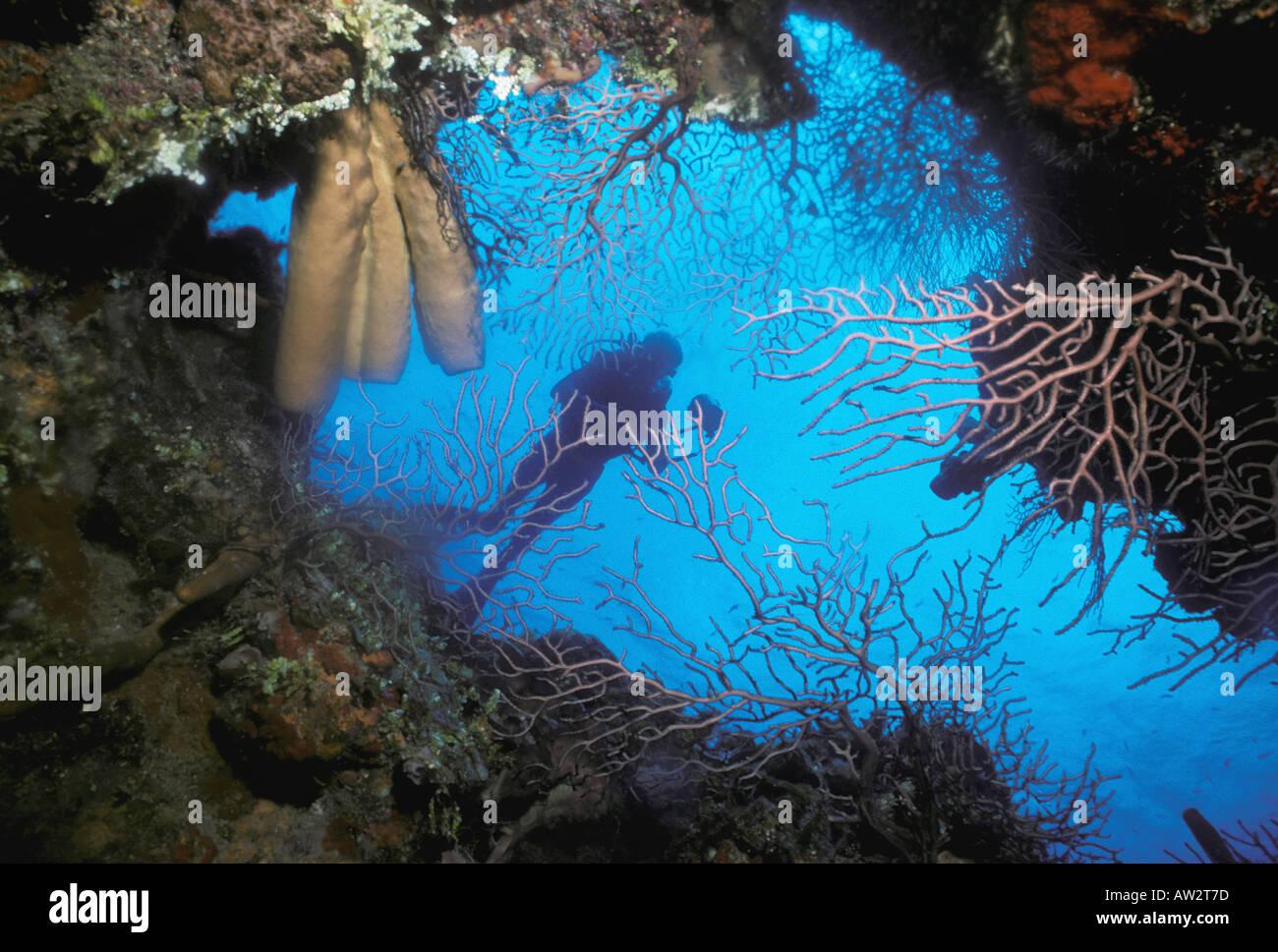 Unterwasser Taucher gerahmt bei Öffnung der Korallen Höhle gefüllt ...