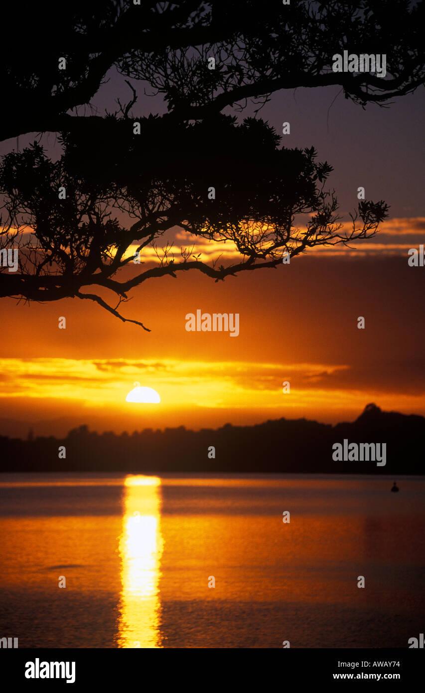Sonnenaufgang über Pohutakawa Baum Waiheke Island Auckland New Zealand Stockbild