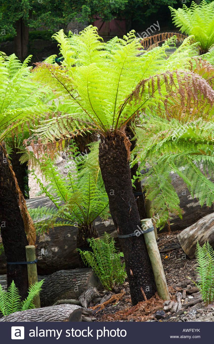 Prehistoric Gardens Stockfotos & Prehistoric Gardens Bilder - Alamy