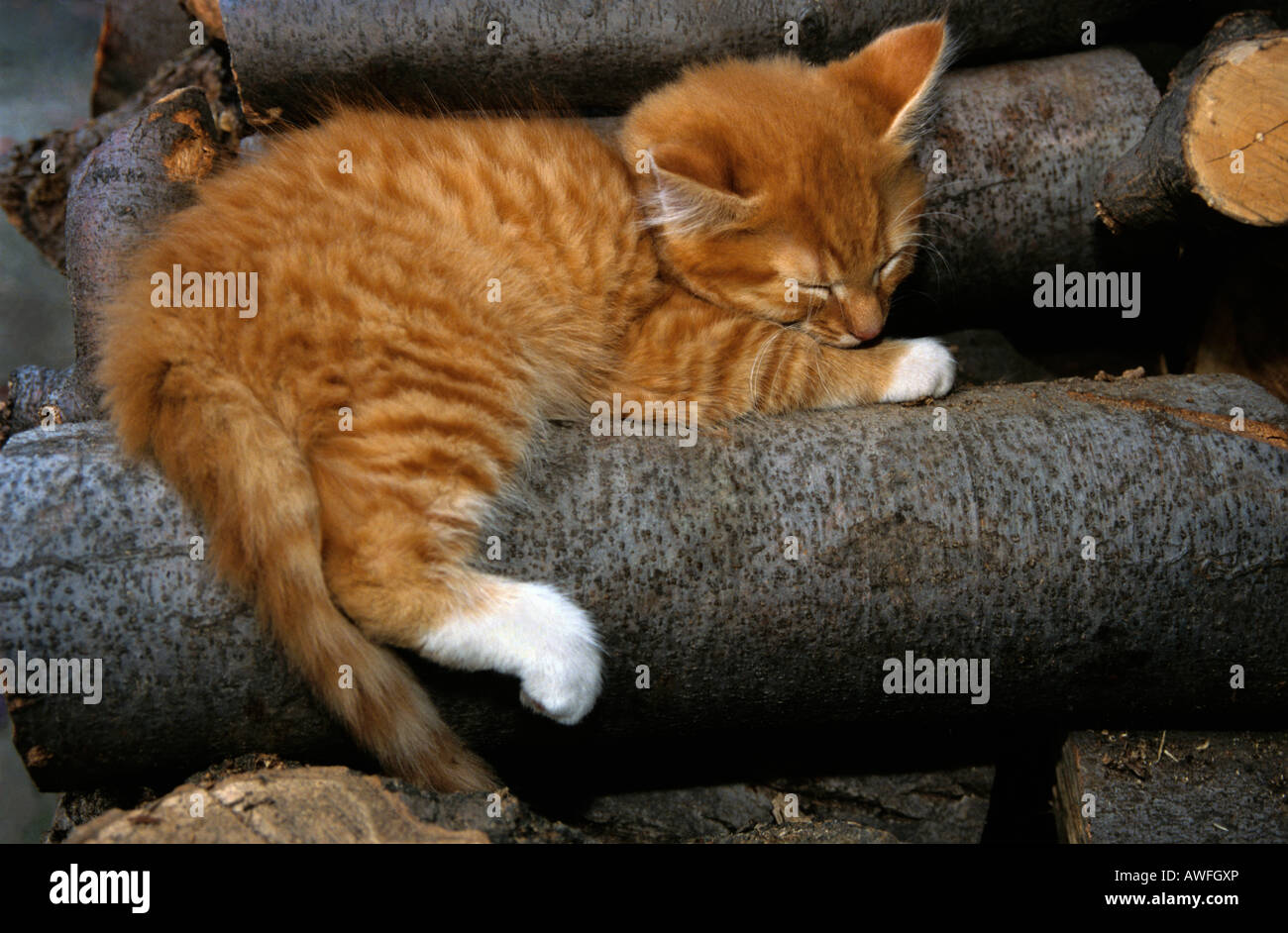 Orange Tabby Kätzchen schlafen auf einem Holzstapel Stockbild