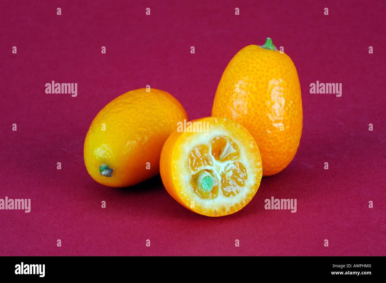Kumquats Stockbild