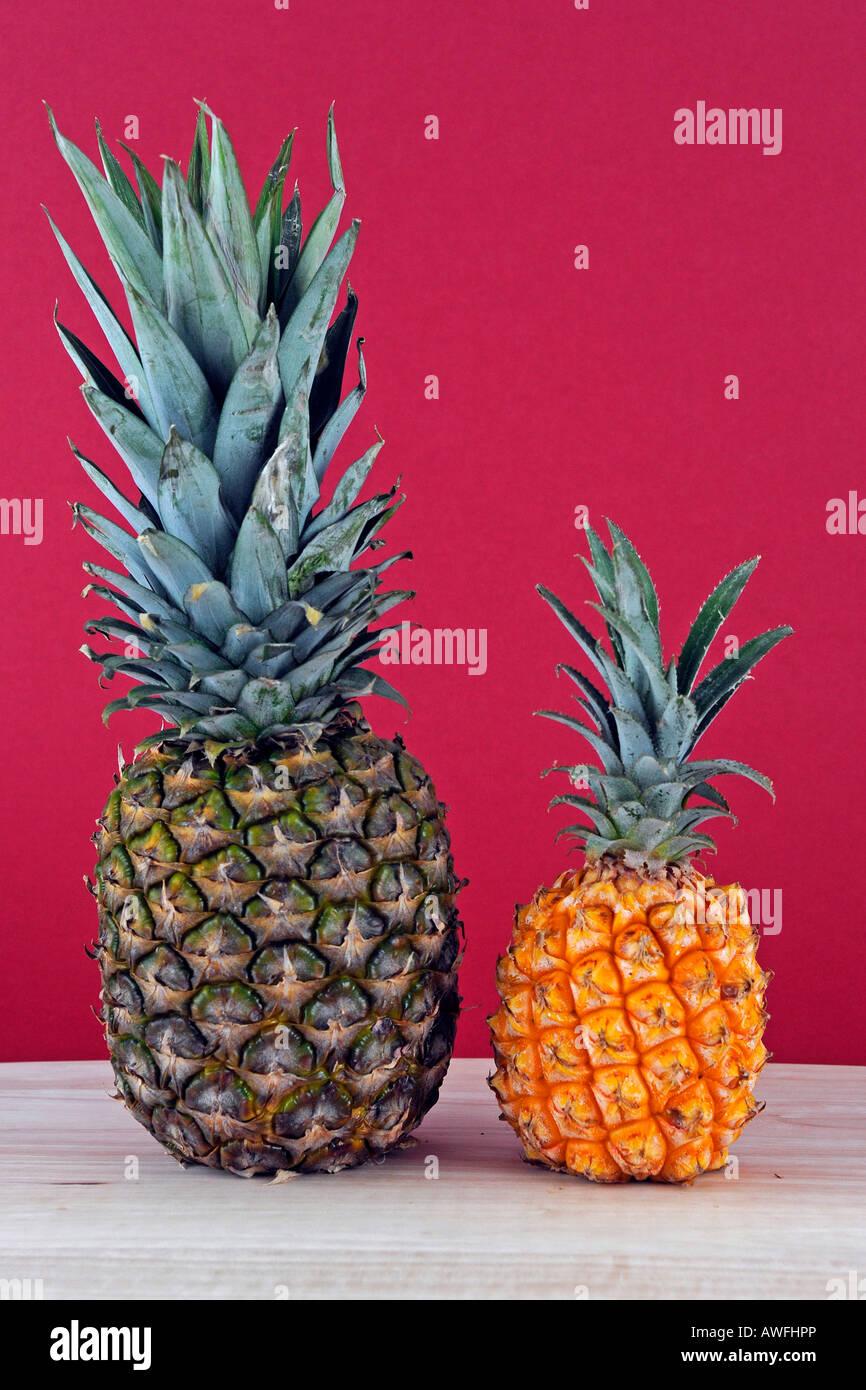 Zwei Arten von Ananas Stockbild