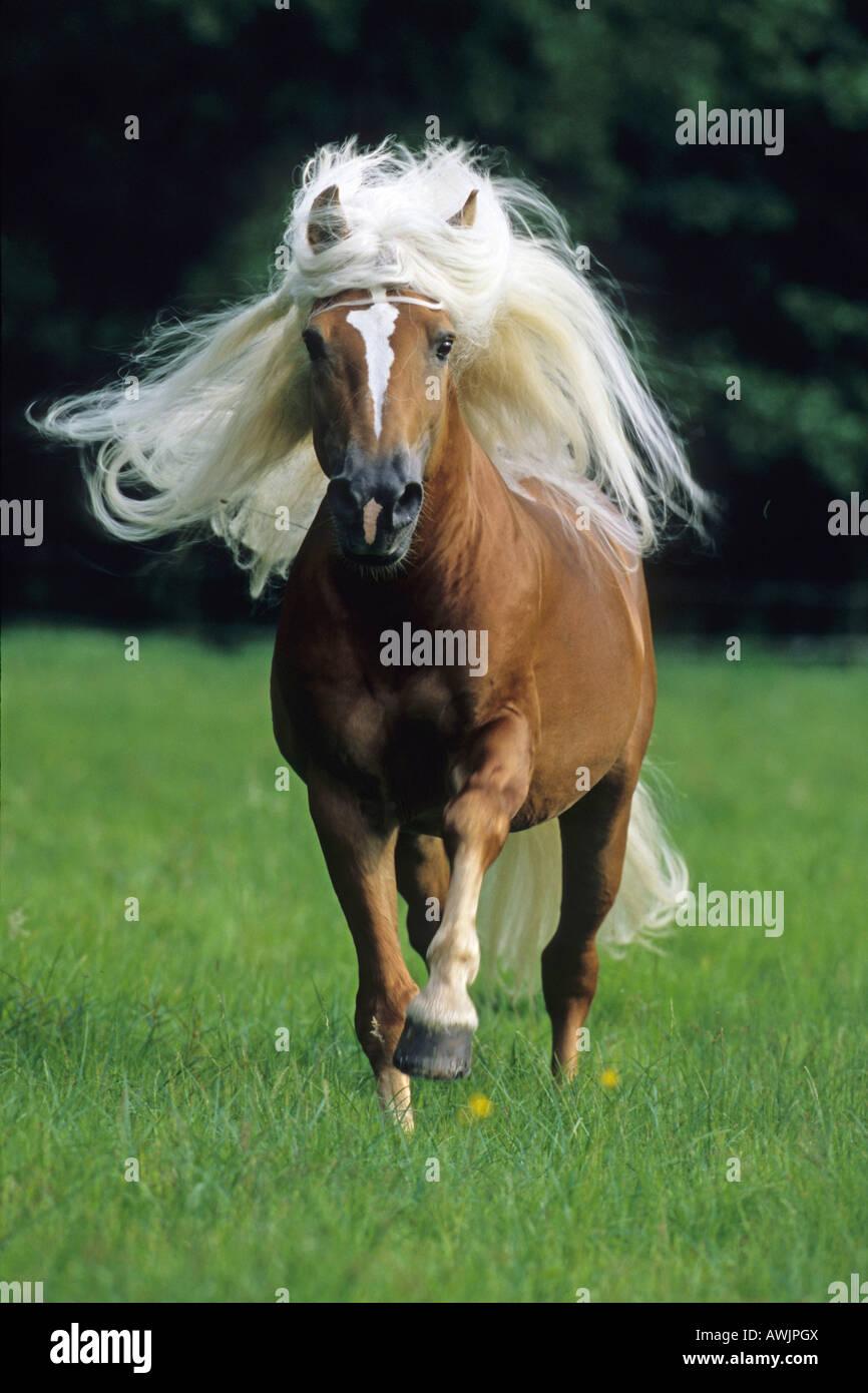 sie fickt ihr pferd