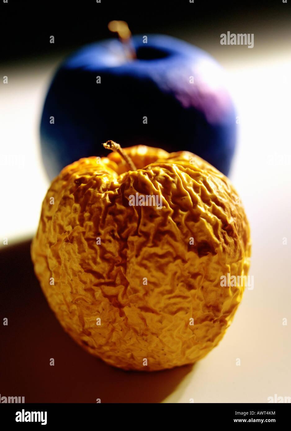 Eine faltige Golden Delicious Apfel und ein blauer Apfel Stockbild