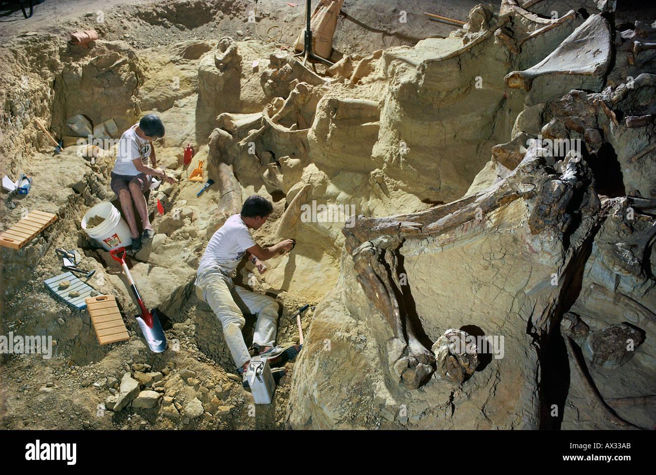 Paläontologen Ausgrabungen die Reste einer kolumbianischen Mammut Mammut Website South Dakota Stockfoto