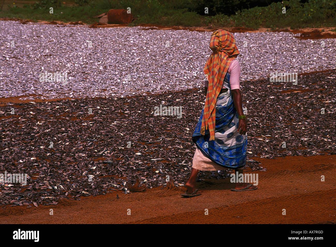 Trockenfischverarbeitung, Goa, Indien Stockbild