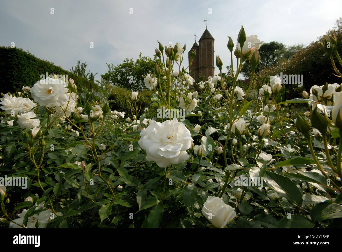 Weißer Garten Sissinghurst im weißen garten sissinghurst in kent stockfoto bild 9690494