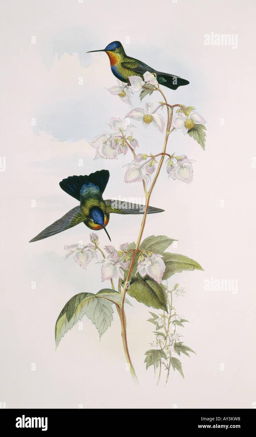 Fantastisch Süsse Kolibri Malvorlagen Galerie ...