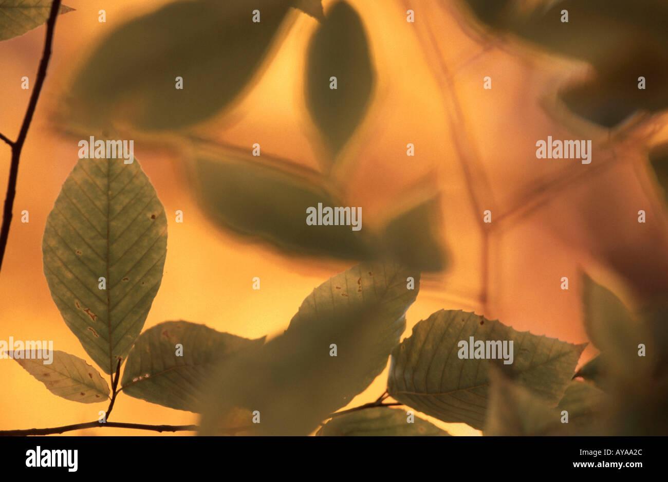 Blätter im Herbst Herbstblaetter Abstrakt abstrakte Querformat horizontale Stockbild