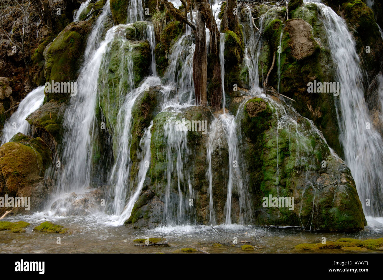 Moose Auf Pfeil Bambus Wasserfall In Mab Man And Biosphere Reserve