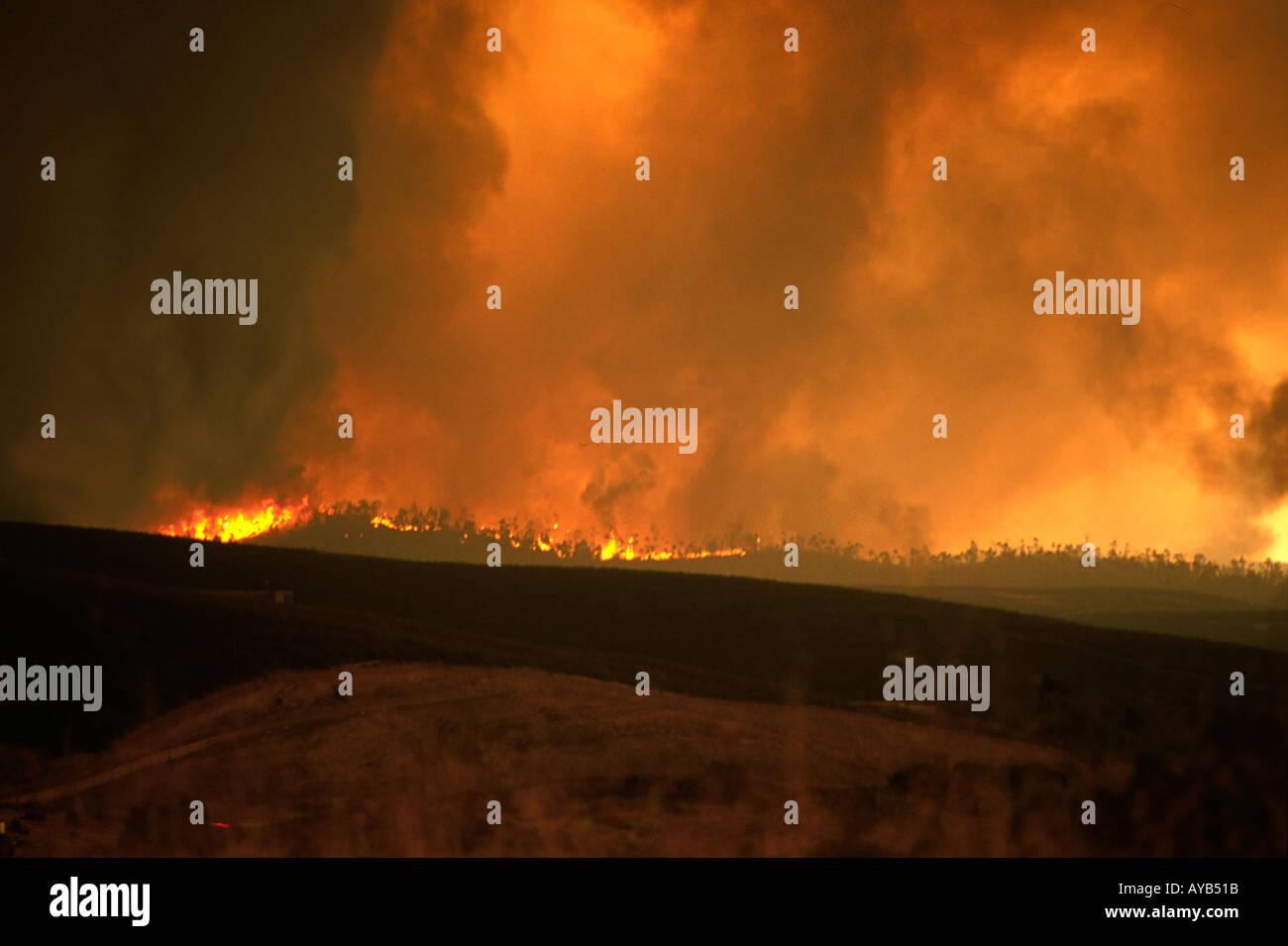 Brände in der Algarve-Portugal Stockbild