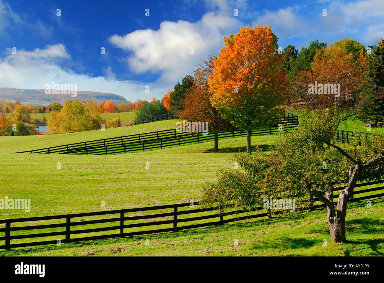 Grasigen Weiden und Hof Pferdehof mit Niagara Escarpment in der Herbst-Ontario Stockbild