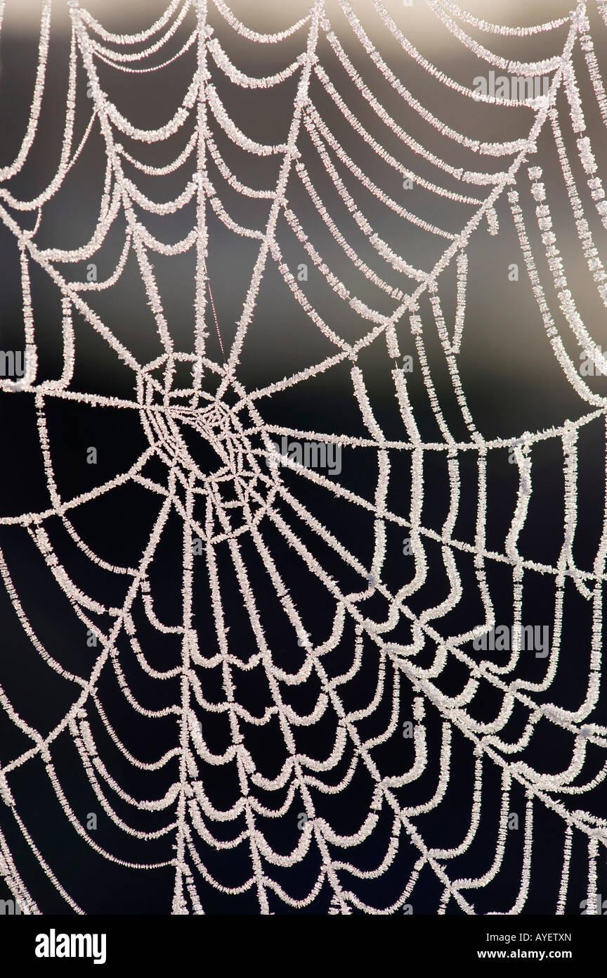 Gefrorene Spider web Stockbild
