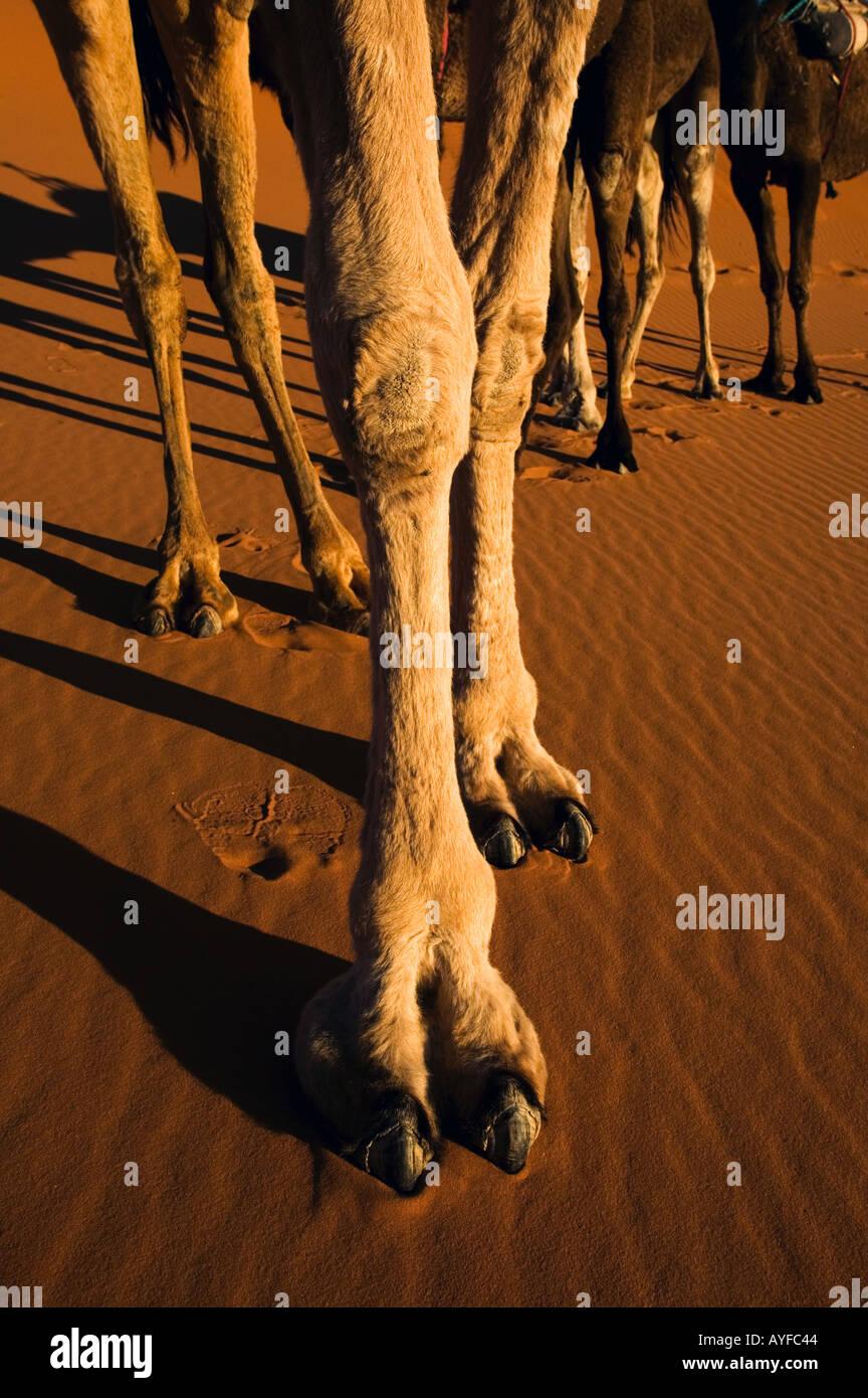 Reife Frauen Kamel Zehen