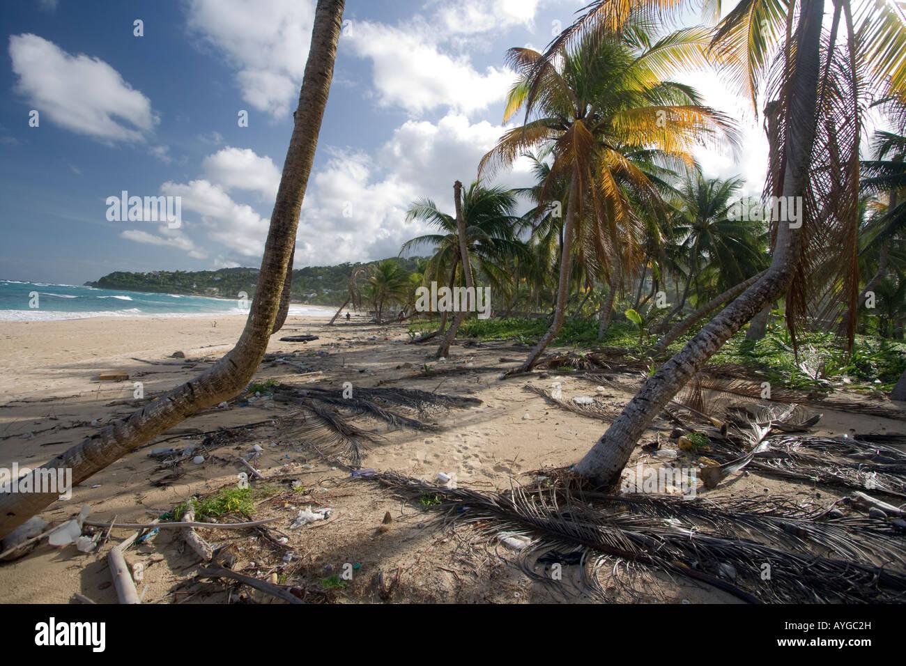 Jamaika Bucht an der Ostküste nach Hurrikan Dean schmückten Palmen und Strand-Bars und Häuser Stockbild