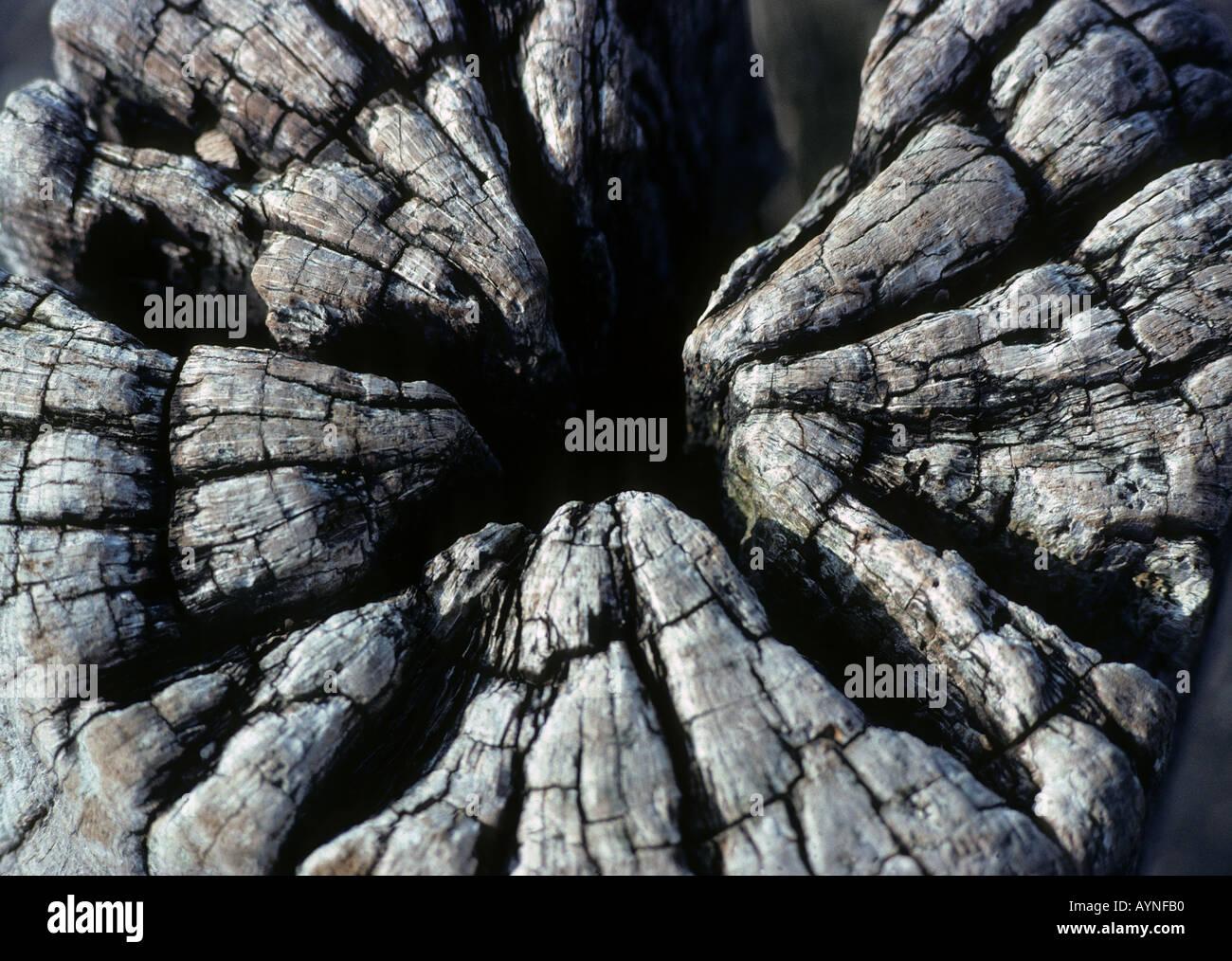 Nahaufnahme von verwittertem Holz gebleicht stumpf Unterstützung von einem verlassenen pier Stockfoto