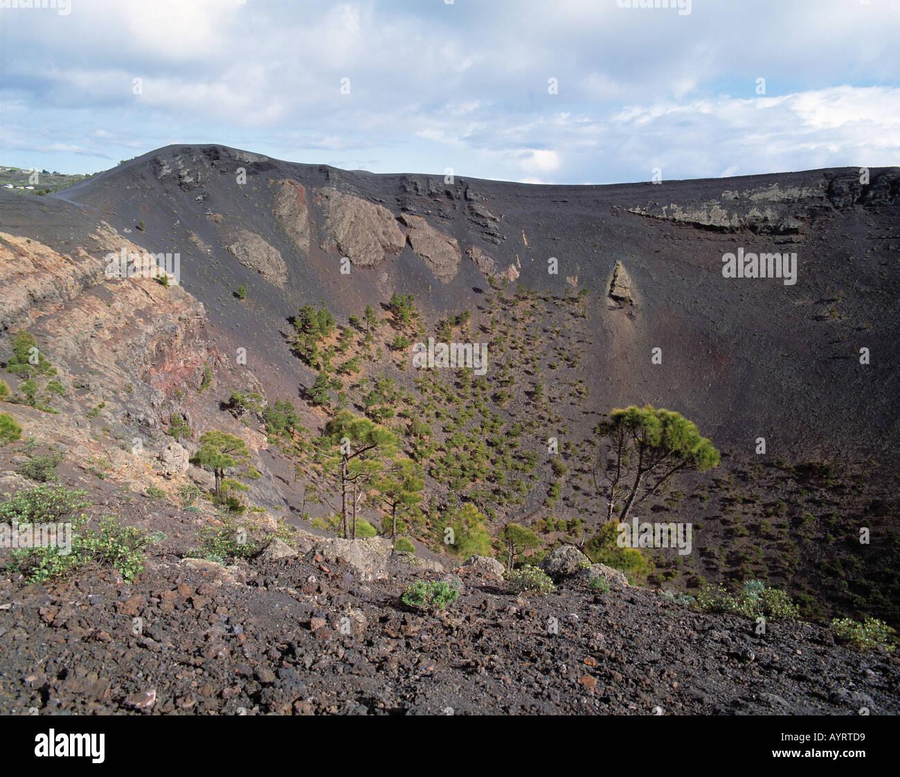 Vulkan San Antonio, Blick in Höhle Krater, Lavagestein, Lavaasche, Pinien Wachsen Auf Lavaasche, Fuencaliente, La Palma, Kanarische Inseln Stockbild