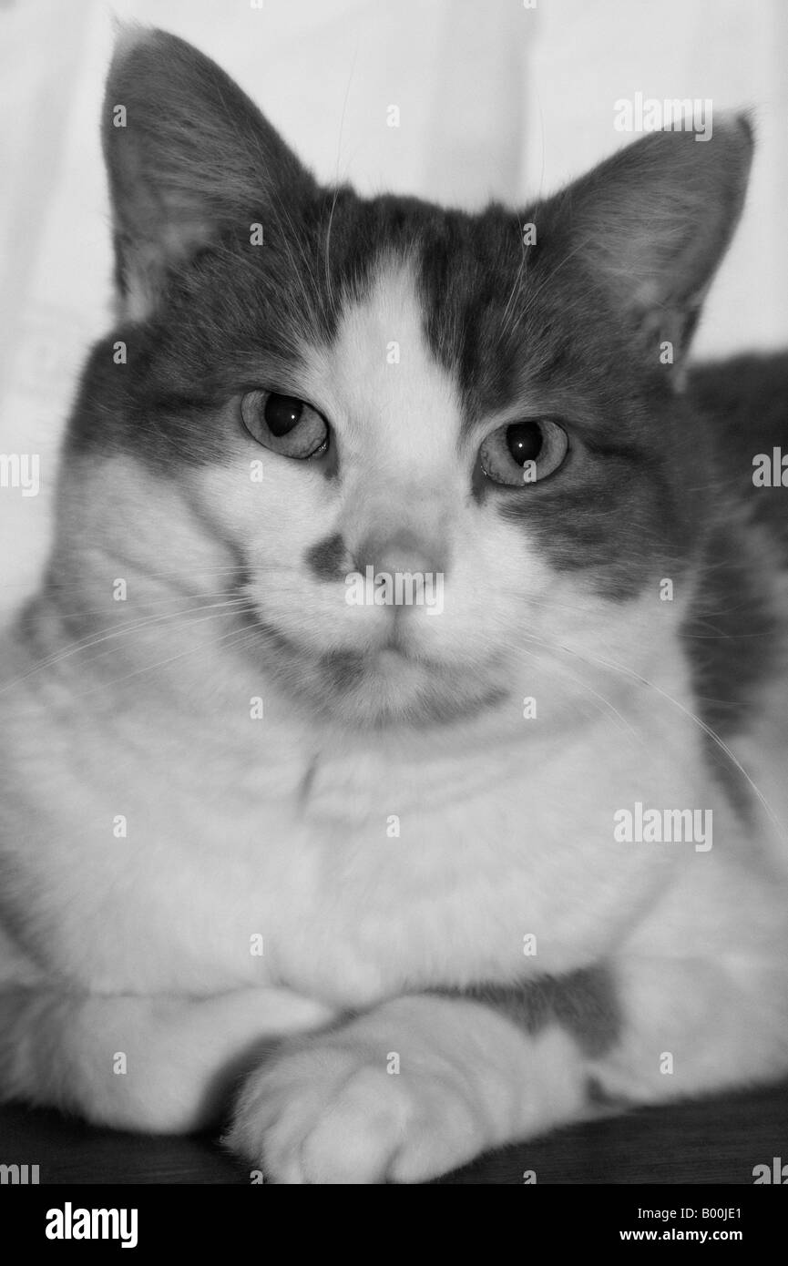 Graustufen-Bild einer Katze zu entspannen. Stockbild