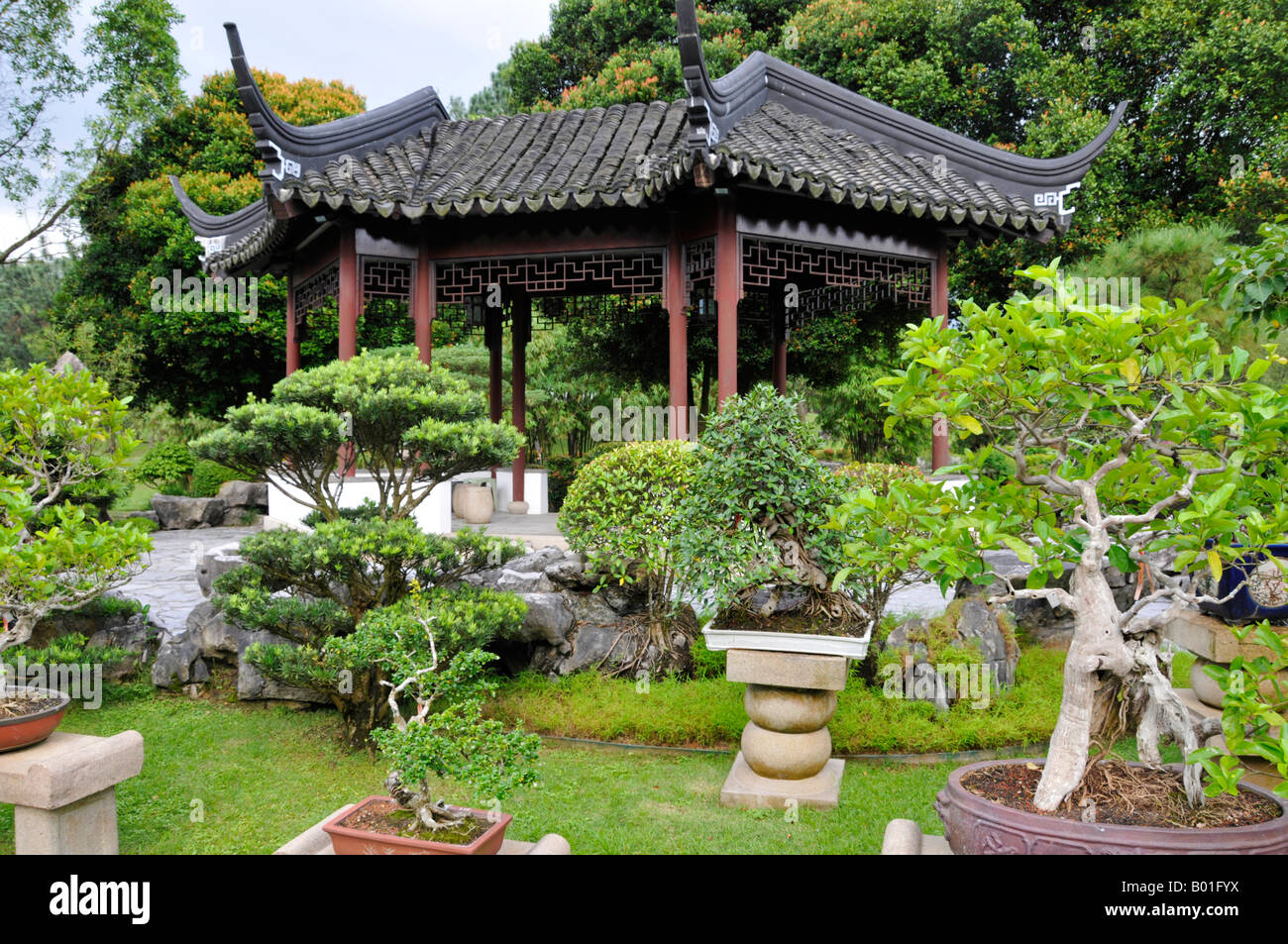 Bonsai baum garten  Bonsai-Baum-Garten in der chinesischen und japanischen Gärten in ...