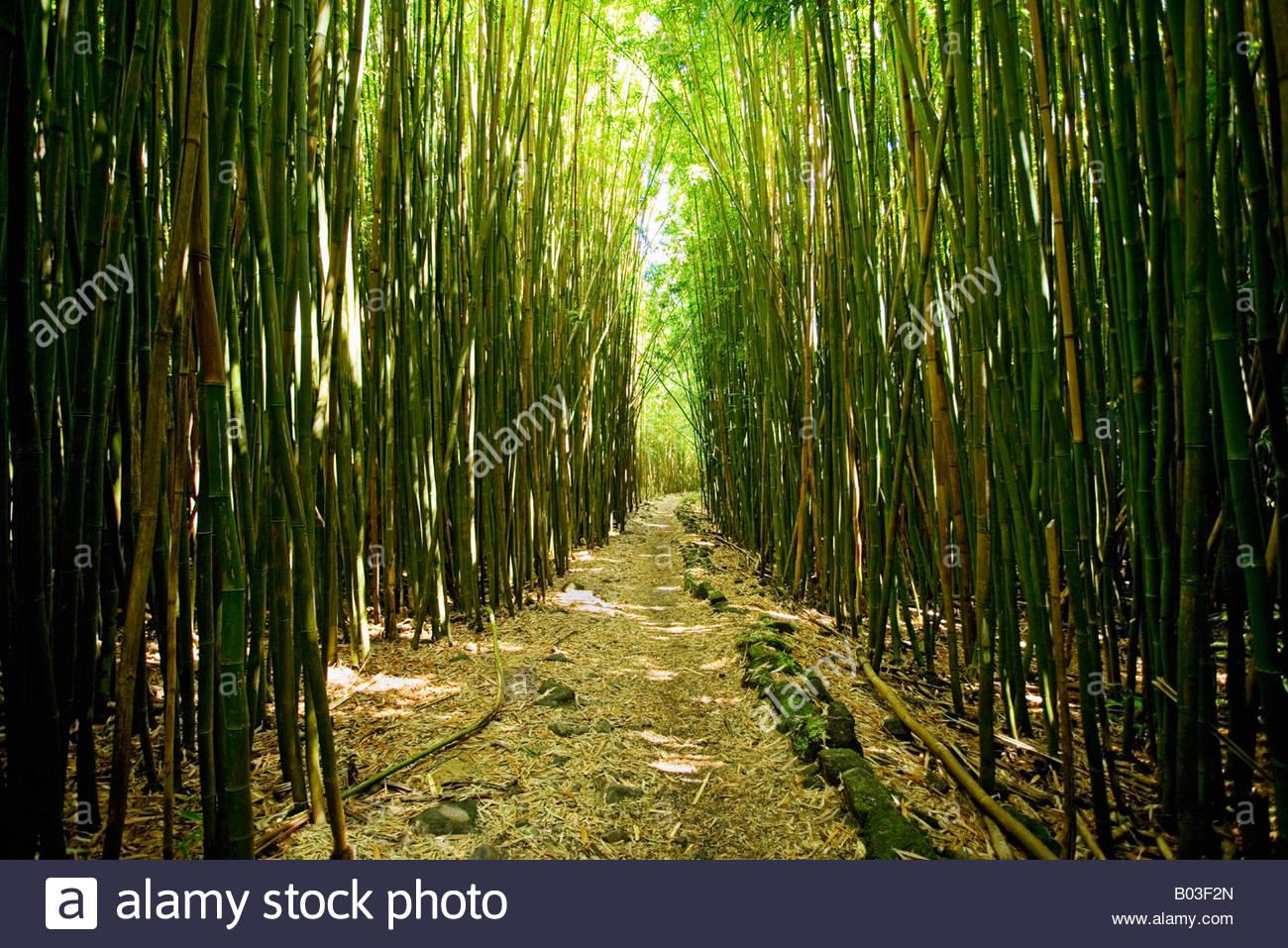 Pipiwai Trail In Bambus Wald Des Haleakala National Park Auf Der