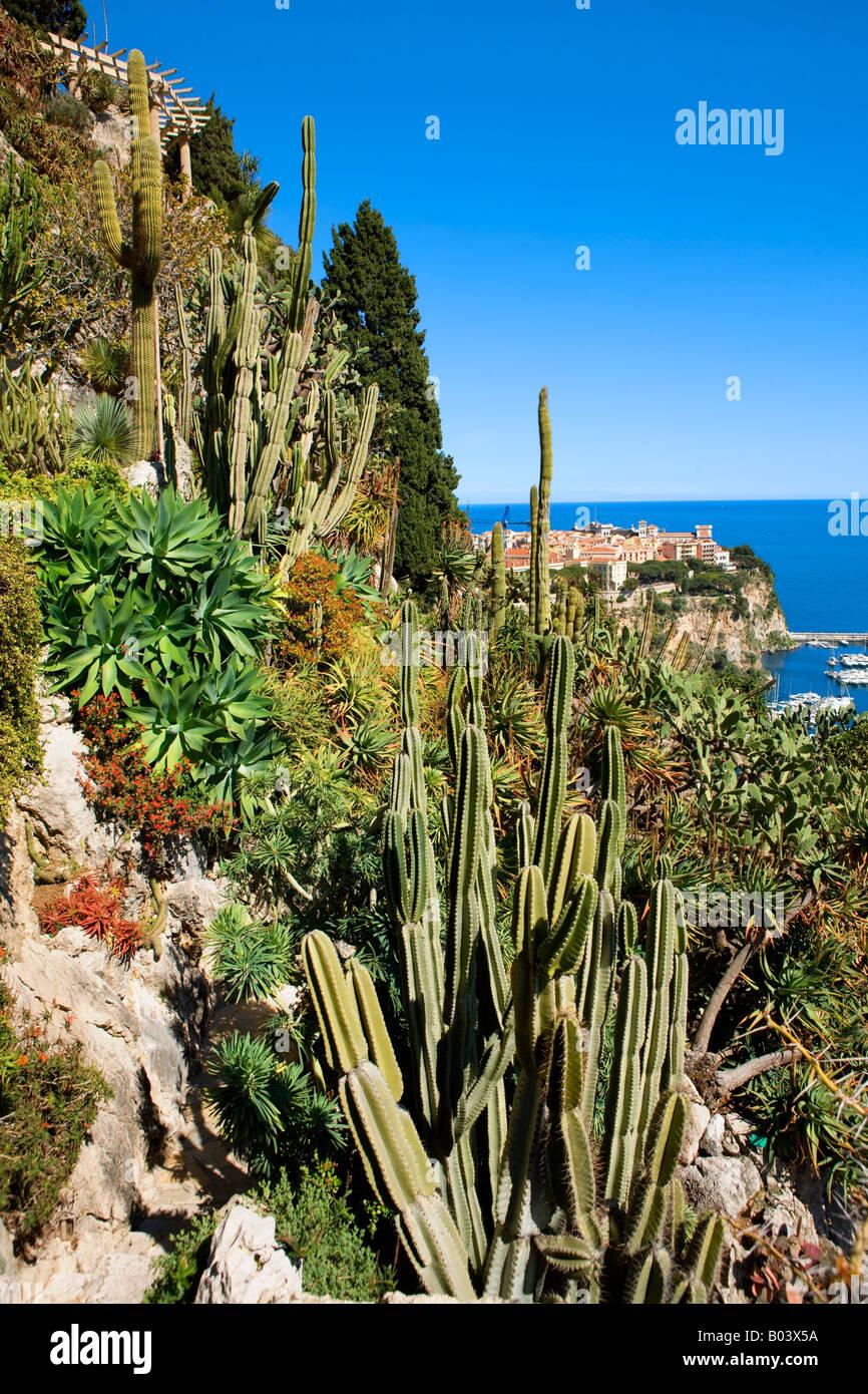 Exotischer Garten In Monaco Stockfoto Bild 17296758 Alamy
