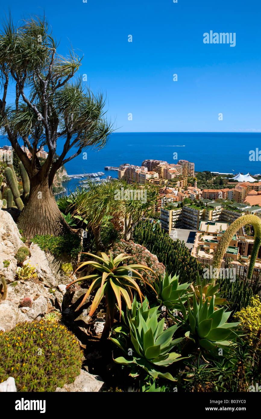 Exotischer Garten In Monaco Stockfoto Bild 17297728 Alamy