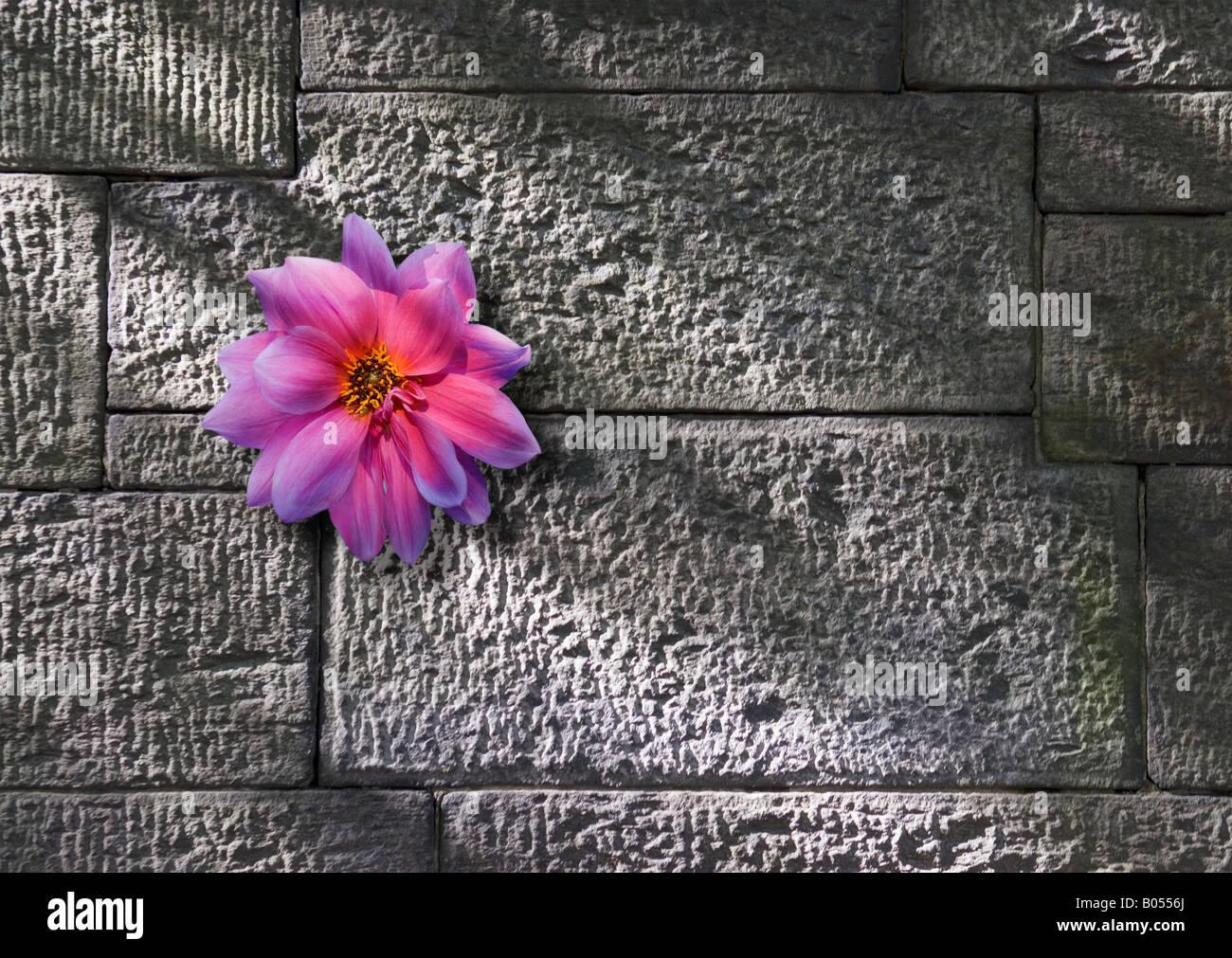 Blume wächst auf Steinmauer Stockfoto