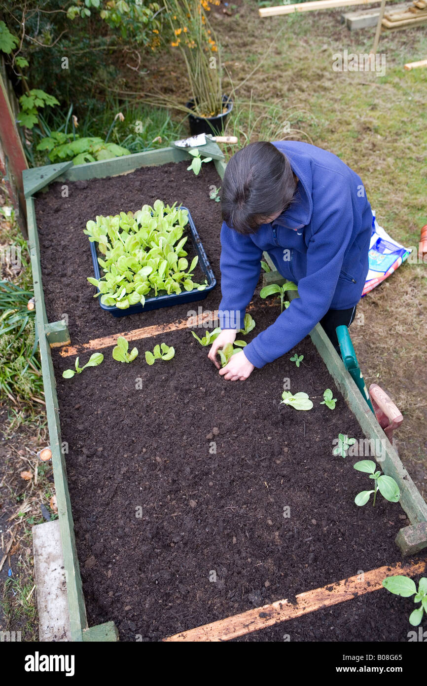 Frau Gartner Anbau Von Gemuse In Ihrem Garten In Hochbeeten