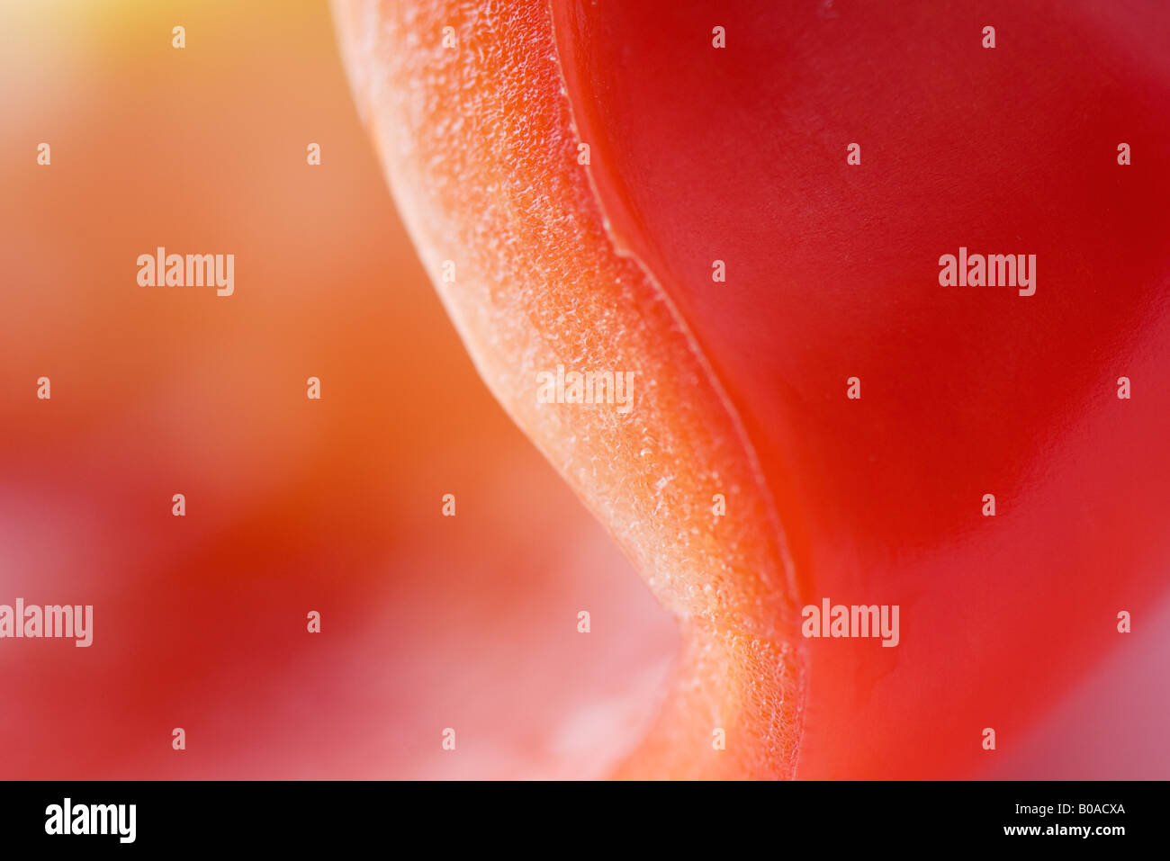 Rote Paprika, extreme Nahaufnahme Stockbild