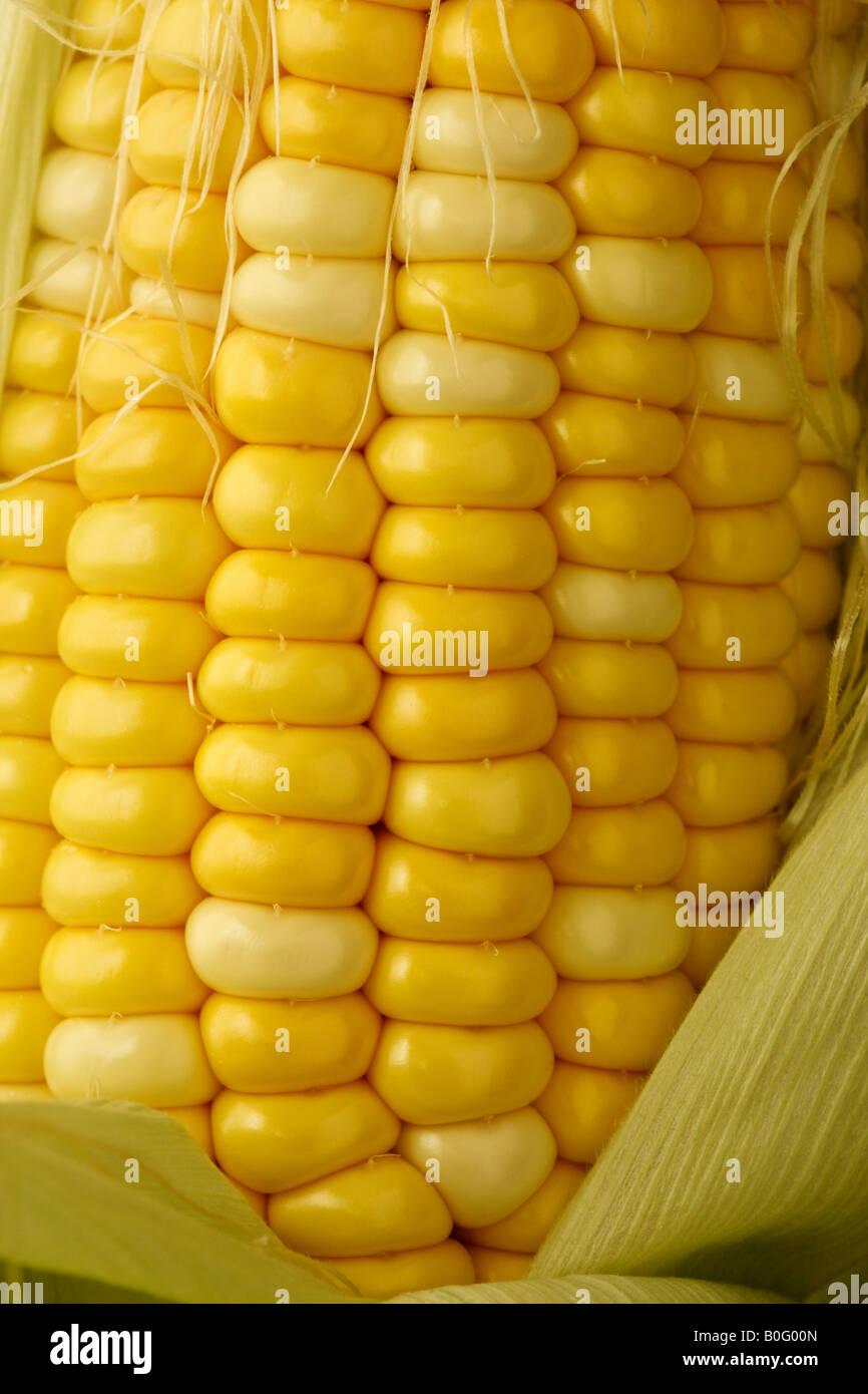 Nahaufnahme Detail der frische Maiskolben Stockbild