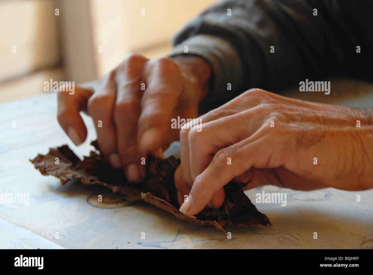 Hände eines Tabak Bauer das Rollen einer Zigarre Valle de vinales Kuba Stockbild