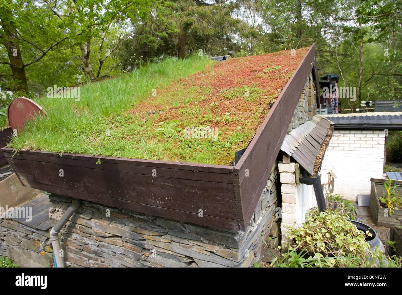 Unglaublich Alternative Zu Rasen Referenz Von Rasen-grasdach Auf Hütte Zentrum Für Technologie Machynlleth