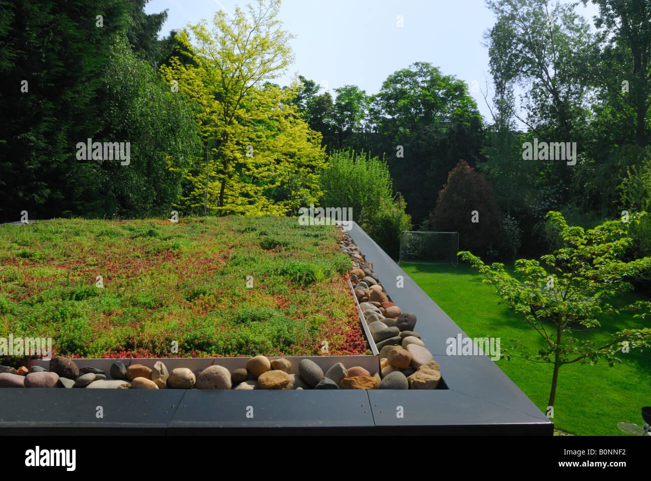 Grüne Sedum Dach Auf Erweiterung Eines Hauses In Surrey