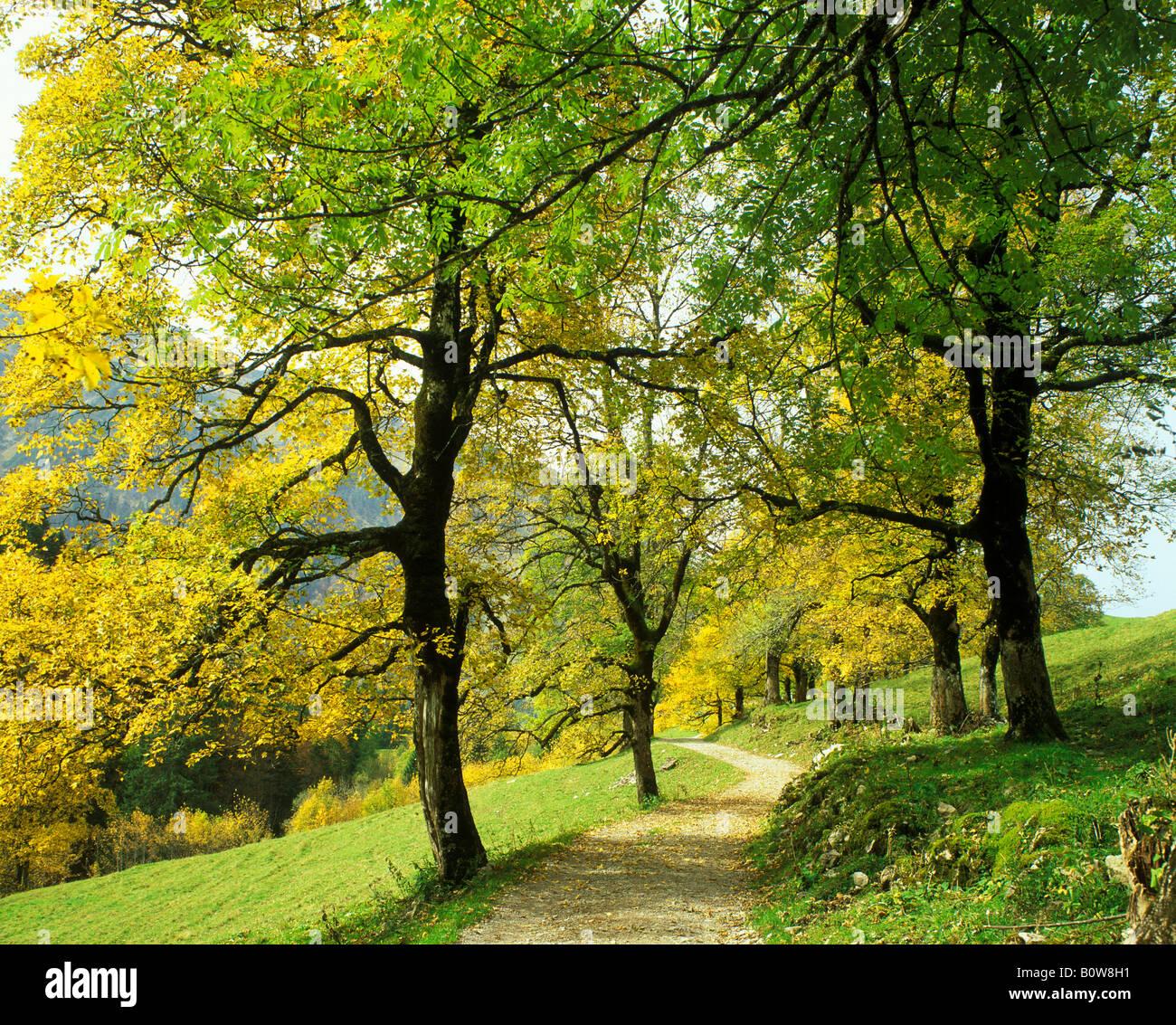 allee deciduous trees stockfotos allee deciduous trees bilder alamy. Black Bedroom Furniture Sets. Home Design Ideas