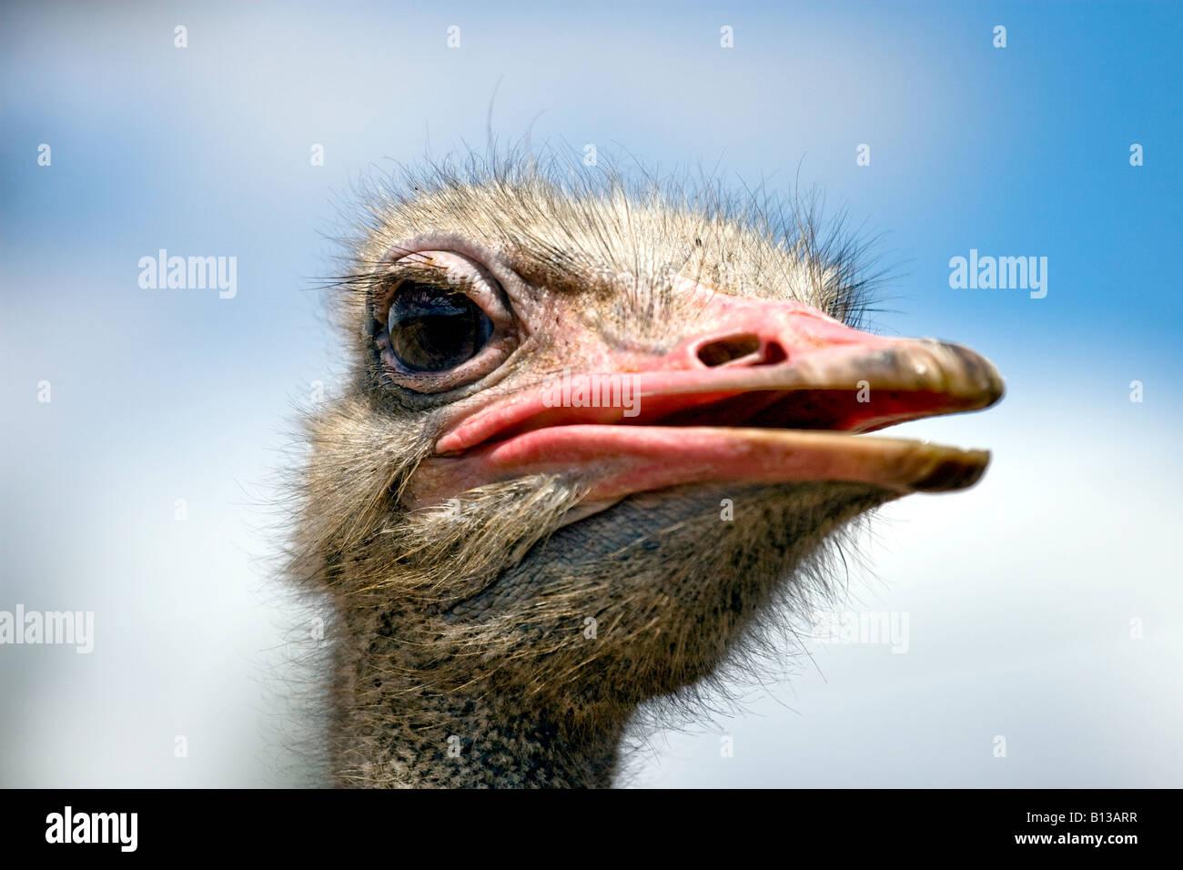 Kiwi egg vs ostrich egg - photo#44