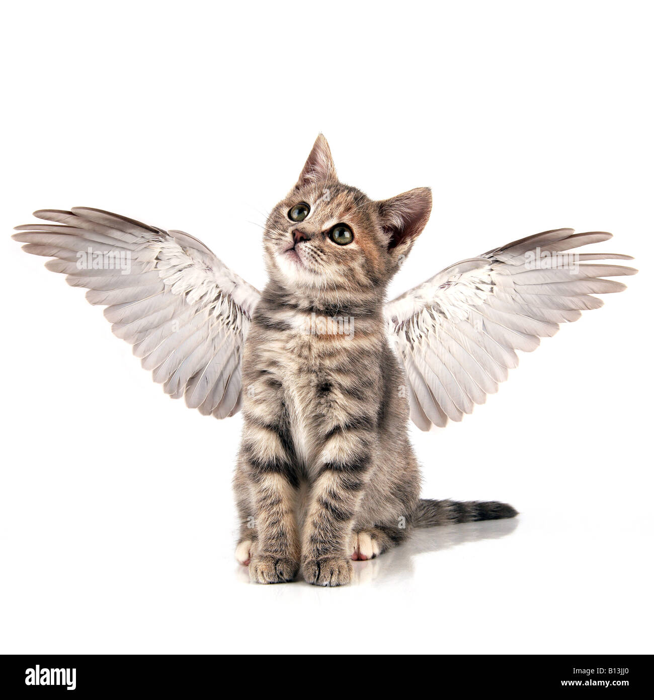 Engel Kätzchen Stockbild