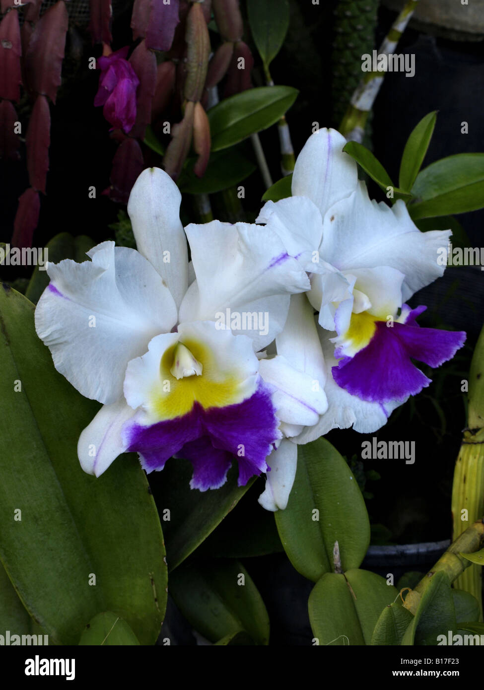 Purple Flowers With Yellow Center Stockfotos Purple Flowers With