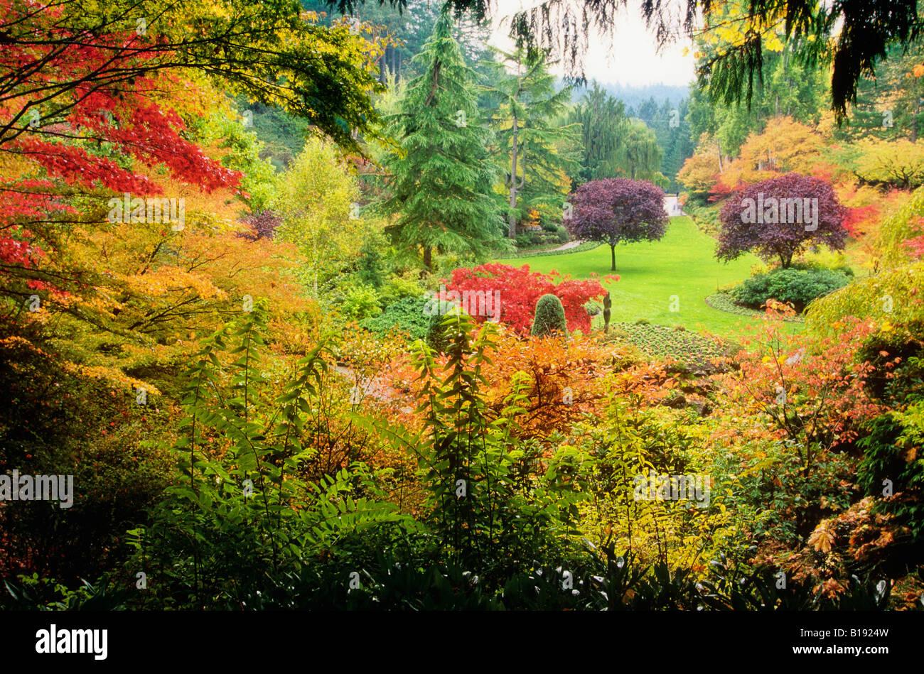 Vancouver Island Canada Trees