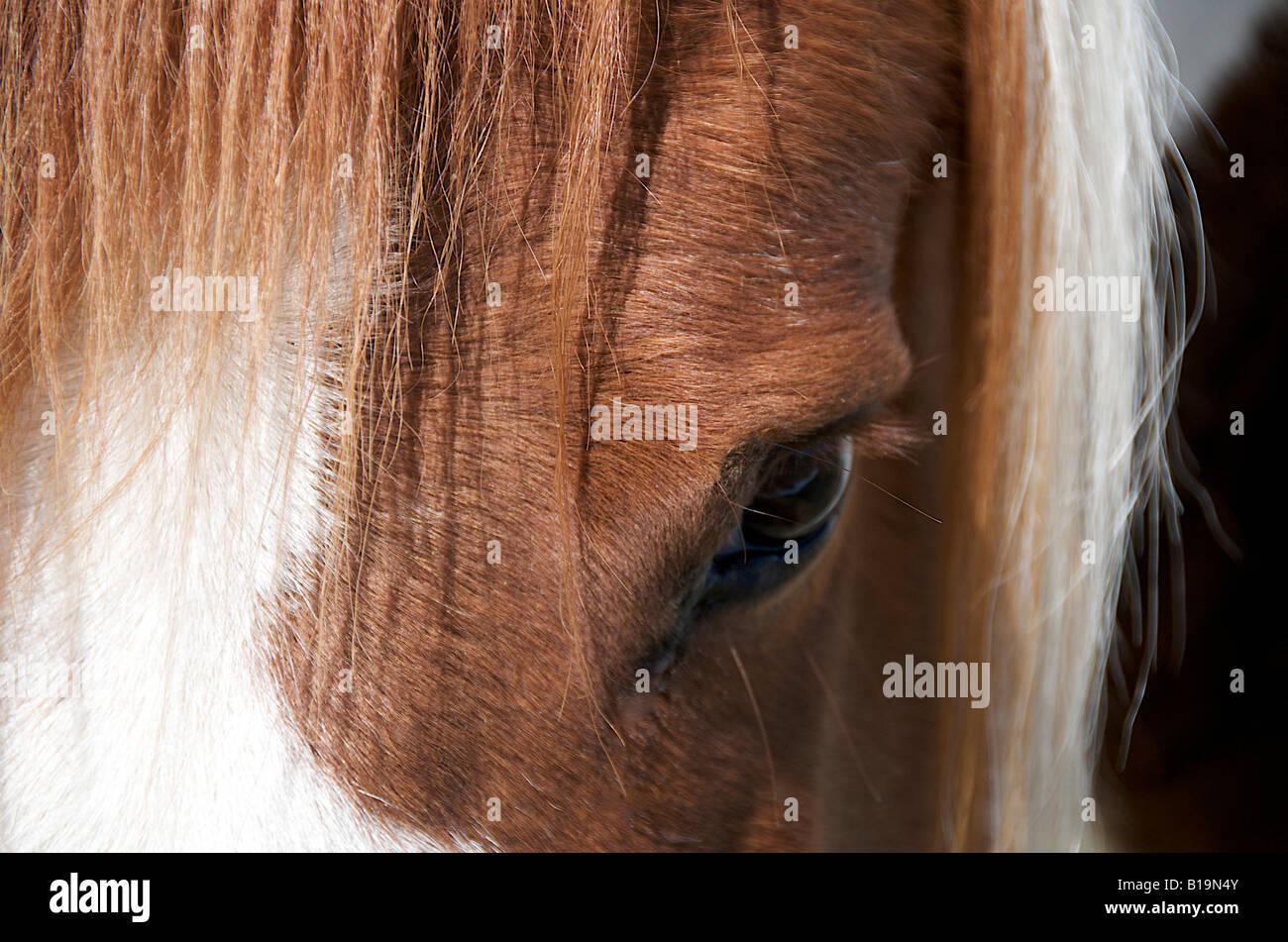 Auge eines Pferdes Nahaufnahme Stockbild