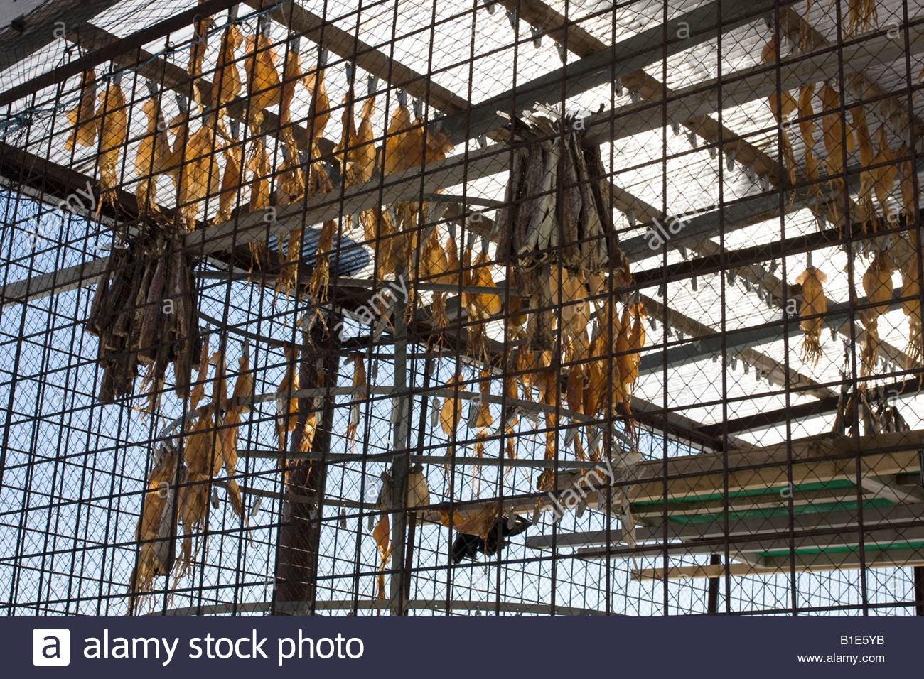 Wire Fish Stockfotos & Wire Fish Bilder - Alamy