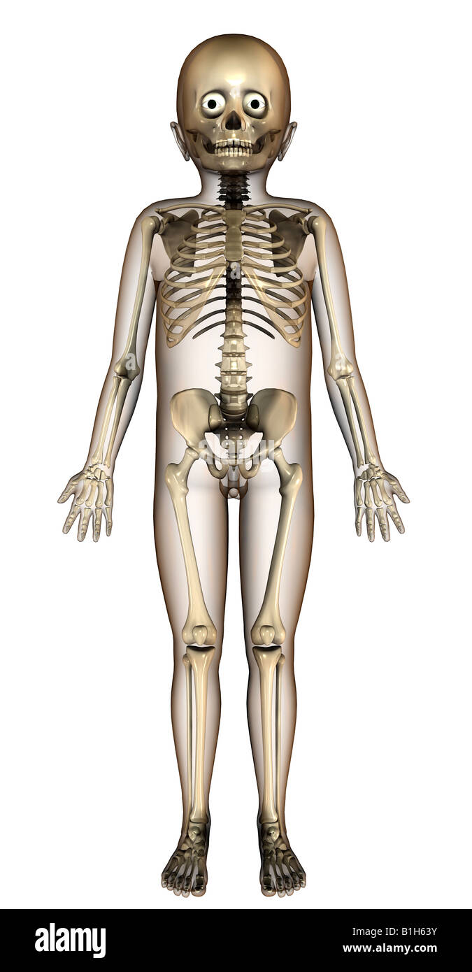 Kind-Skelett Anatomie Stockfoto, Bild: 18203023 - Alamy