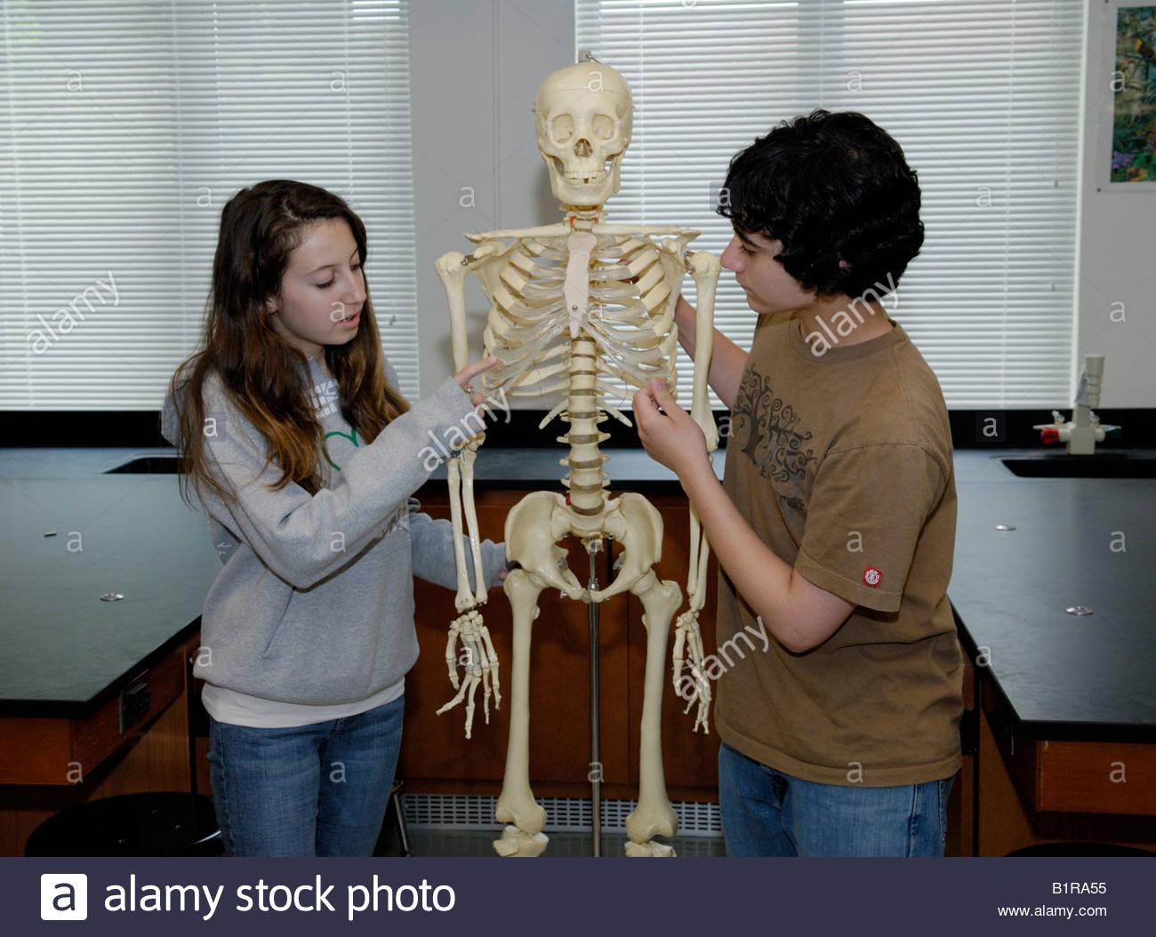 Zwei Schülerinnen und Schüler lernen die Knochen des menschlichen ...