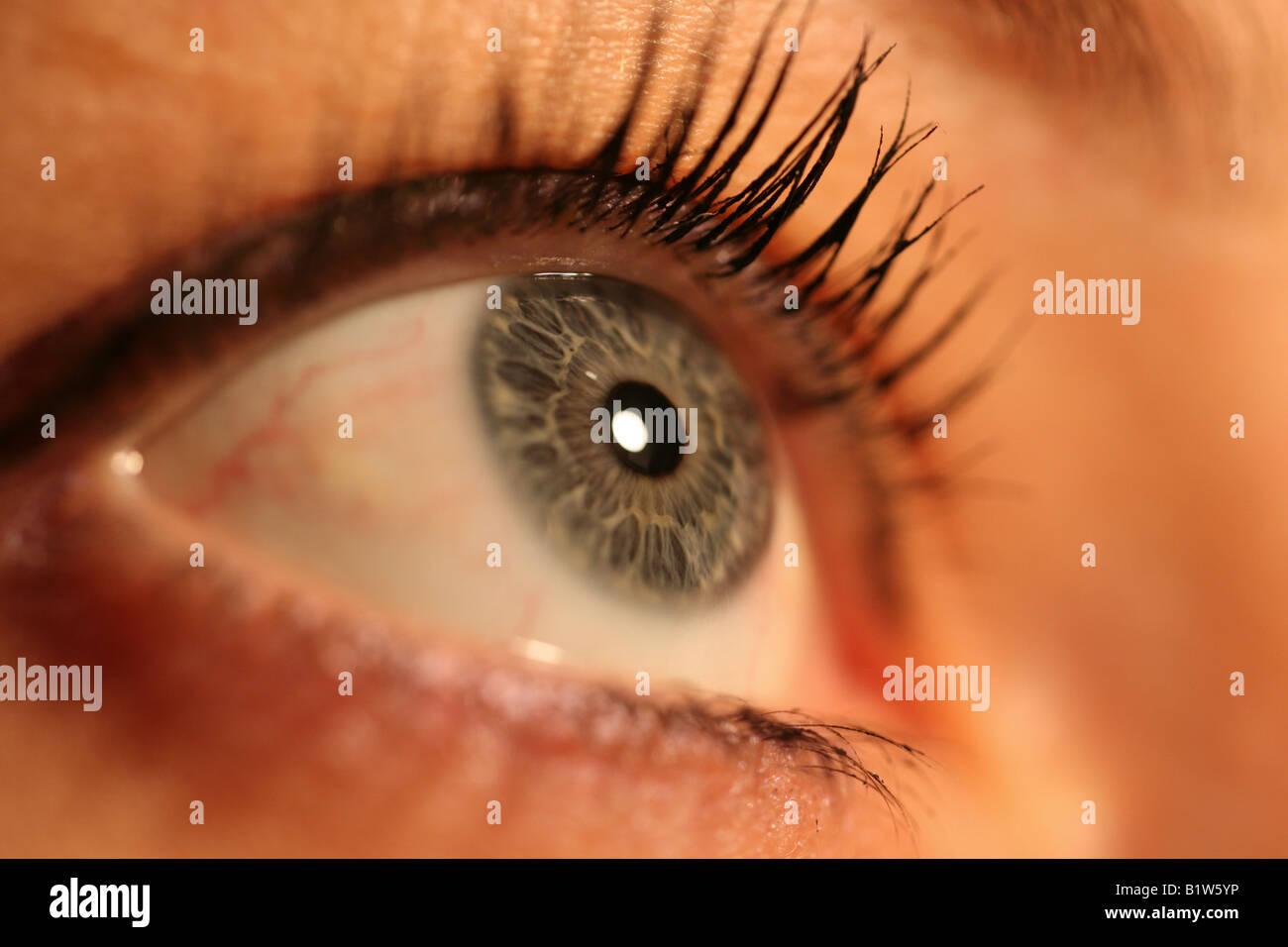 Hervorragende Auge Makro Farbe Der Augen Blau Grun Grau Stockfoto