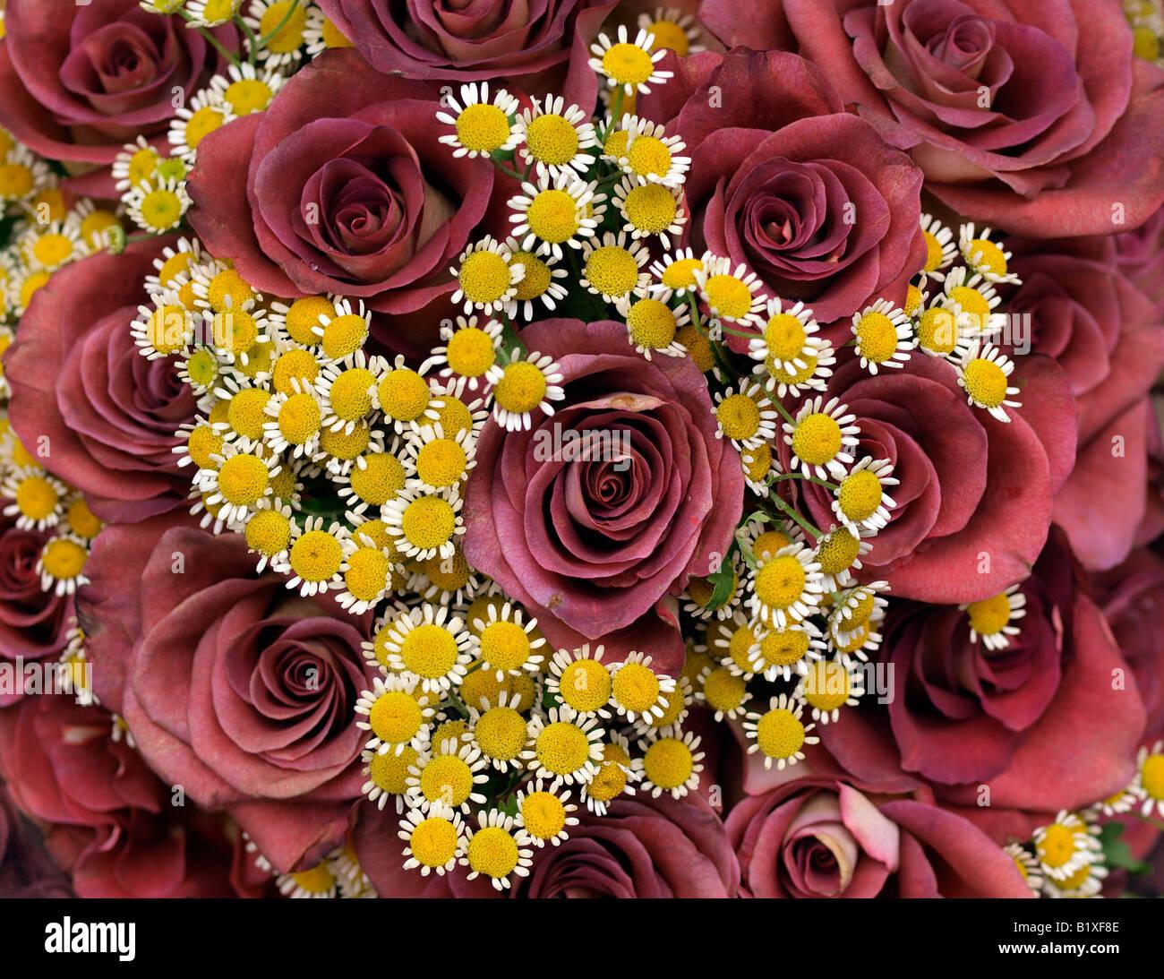rosen mit kleinen bl ten stockfoto bild 18407774 alamy. Black Bedroom Furniture Sets. Home Design Ideas