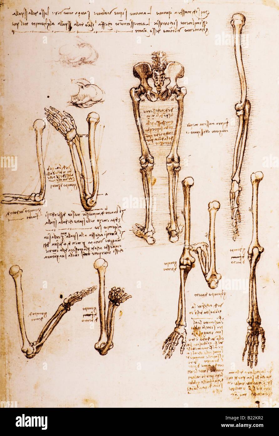 Studien zur Anatomie des weiblichen Beckens, das Steißbein und der ...