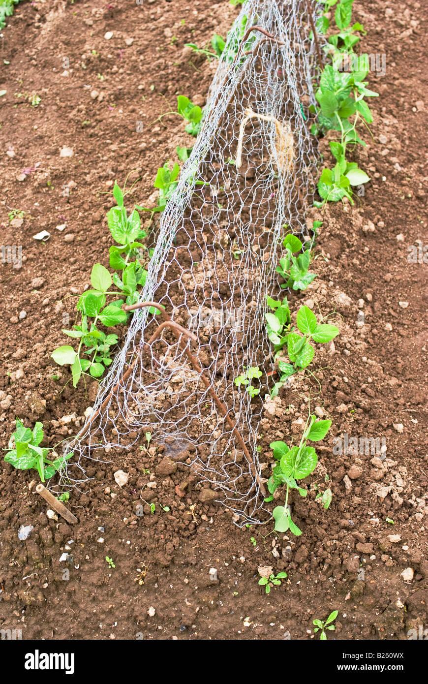Wire Support Stockfotos & Wire Support Bilder - Alamy