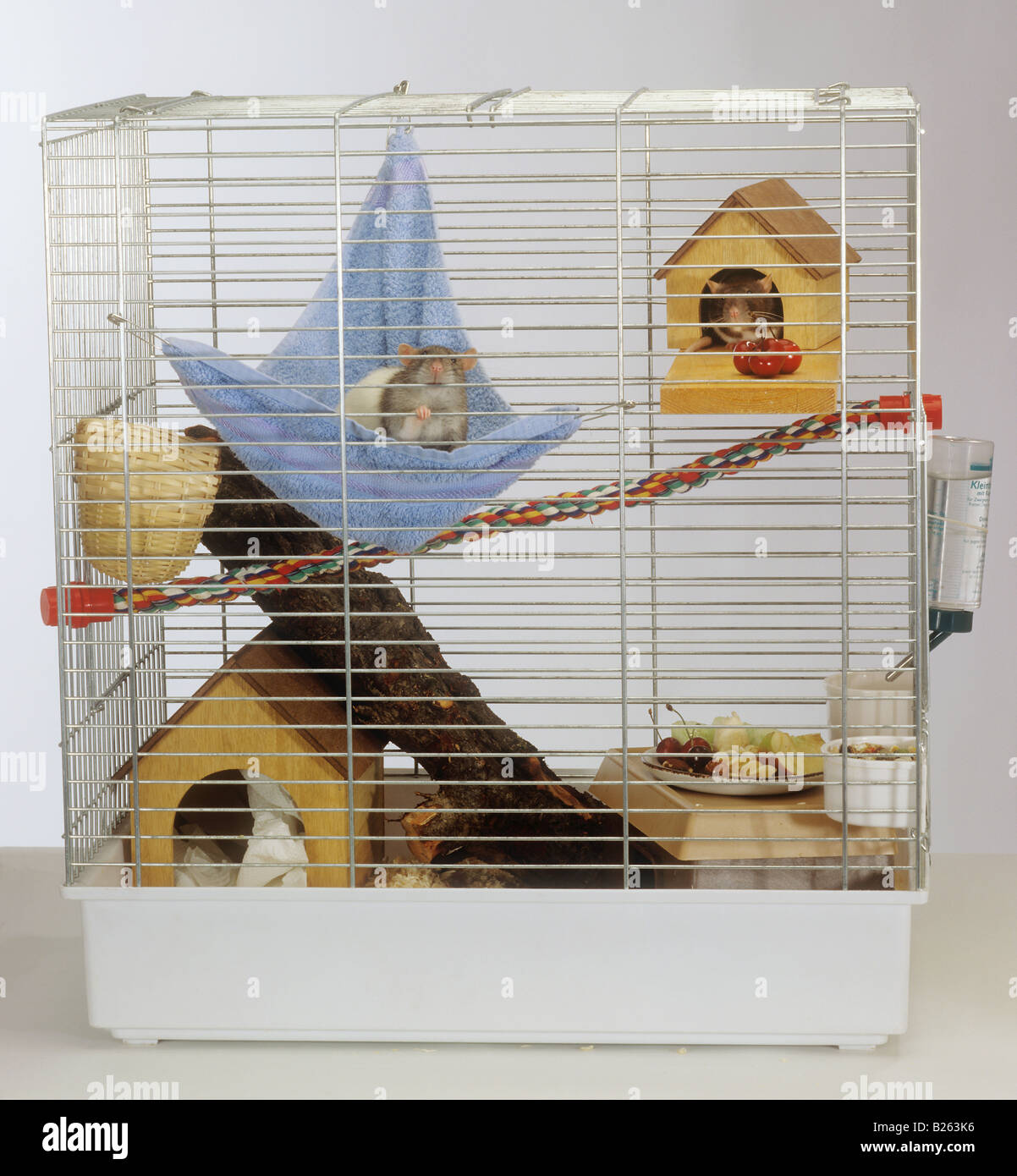 Cage Stockfotos & Cage Bilder - Alamy